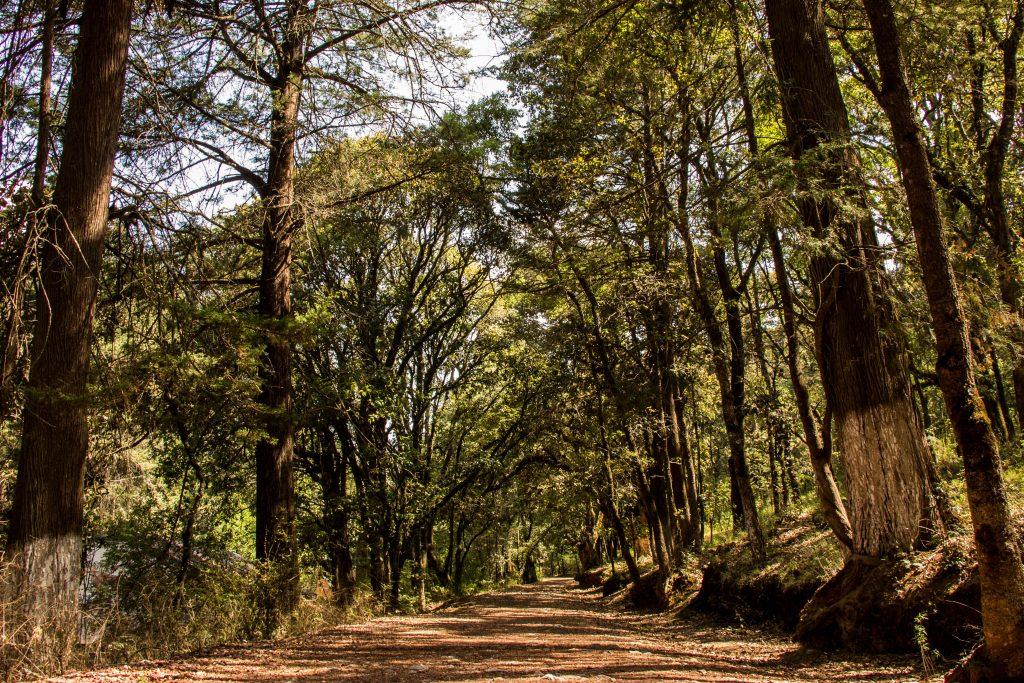 Parque Estatal Bosque El Hiloche