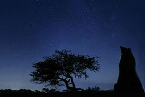 Impulsa la Universidad cielo oscuro en Hidalgo
